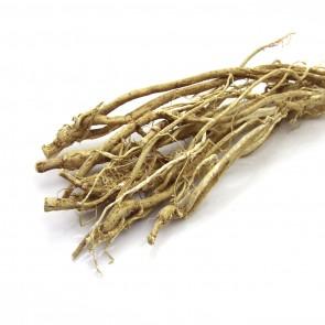Astragalus Root (Milkvetch)
