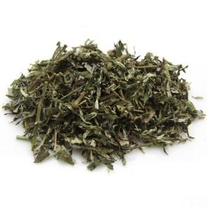 Wormwood (Artemisia absinthium)