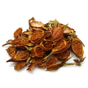Gardenia Jasminoides Fruit