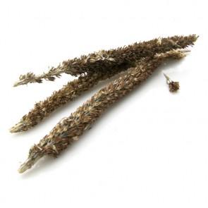 Rock Pine (Orostachys Japonica)